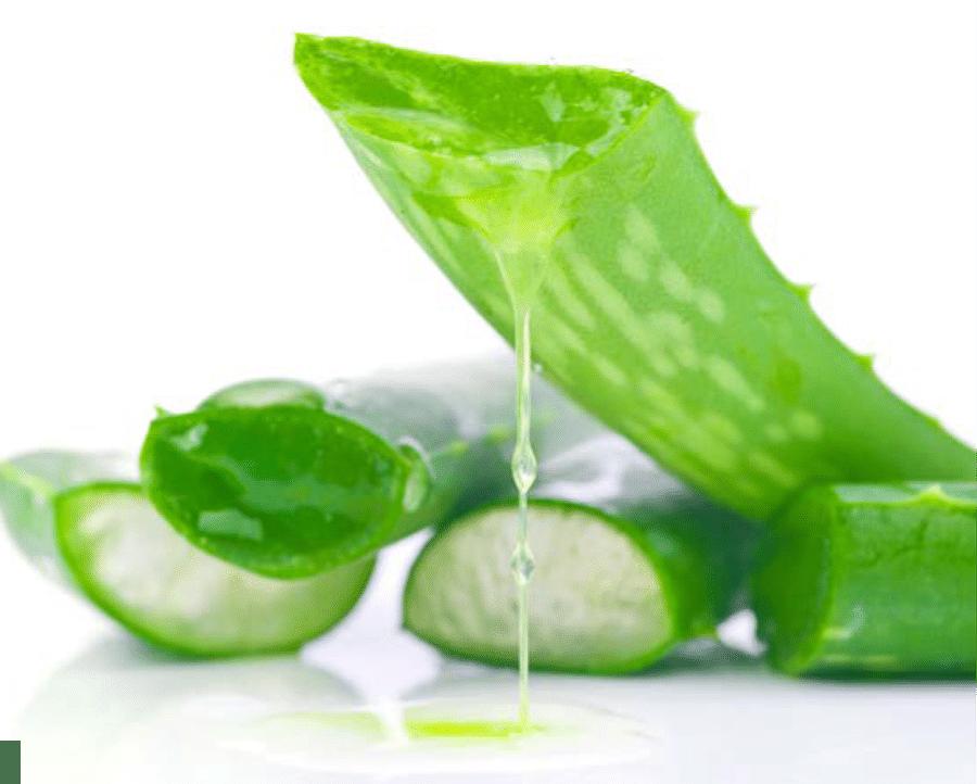 kissclipart-aloe-vera-in-png-clipart-aloe-vera-gel-skin-06655aee207e35a4